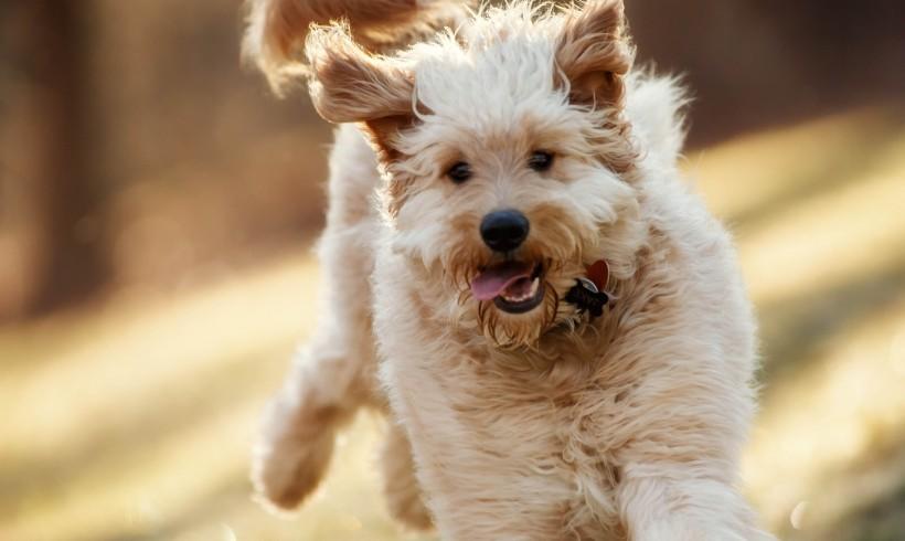 Happy Dog by Jonathan Fredin