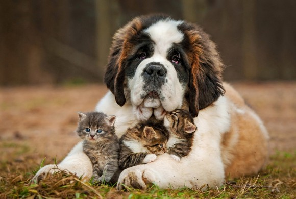 Pet Friendship Story