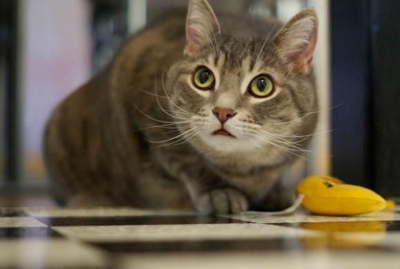 Cat Nipped by Kim′s Pics