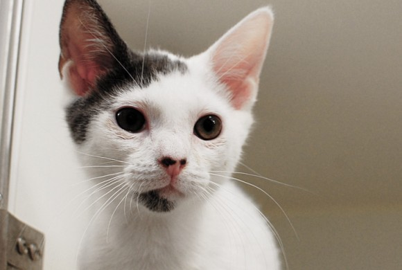 Ready for Adoption This Month