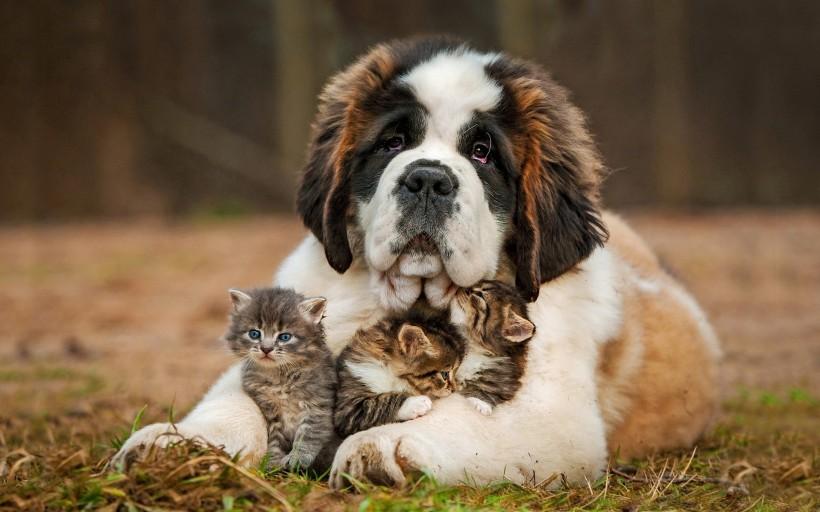 Pet Friendship Story